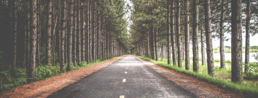 Un camino en medio de arboles